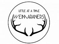 Littleatatimeweimeraners